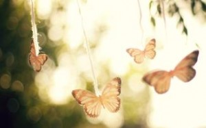 butterflies-mood-hd-wallpaper